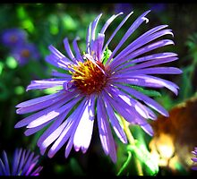 Pretty Purple by John Laubach