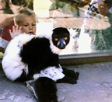 Black and White Lemur and Eager Child by Michelle Miller