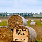 Hay for Sale by Karina  Cooper