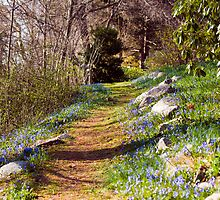 Just a BlueBell Path by Monica M. Scanlan