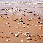 Sea shells on the sea shore by Ben Malcolm