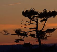 Silhouettes At Dusk by Scott Ruhs