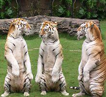 Three Tigers by Kharizma