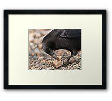 World's Most Intelligent Bird Shows Her Stuff Framed Print