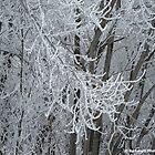 Eloquent Winter's Frost by Barberelli