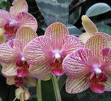 Four Flowers by Hank Eder