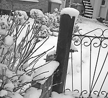 Grey little gate in a garden, South Kenton by Emilie JJ
