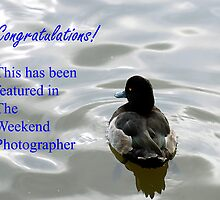 Weekend Photographer Banner entry by buttonpresser