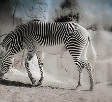 Beauty in Stripes by Elaine  Manley