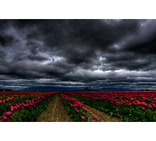 the winds of skagit. Photographic Print