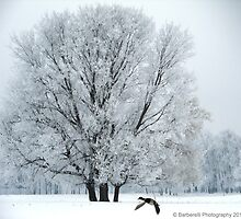 Winter Wonderland by Barberelli
