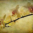 Orchid Textures by Ann Garrett