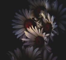 Dying Daisies  by Taylor Smith