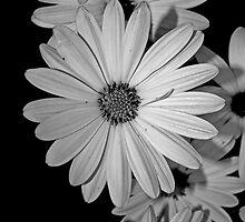 Flowers - Black and White by Zokakelt