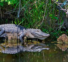 Happy Gator by njordphoto