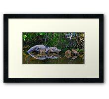 Happy Gator Framed Print