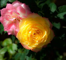 Chameleon Rose by Brandie1