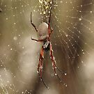 Golden Orb Weaver by Sarah Howarth | Photography
