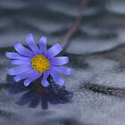 Blue Daisy on Glass by richeriley