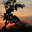 Sunset Botswana by richeriley