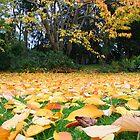 Autumn drop by Andrew Bennett
