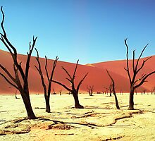 Died trees on sand desert,Namibia by leksele