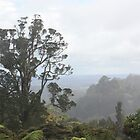 Waitakere Ranges, New Zealand by squidypoo