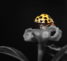 Lady Beetle Hanging Out by Troy Curry