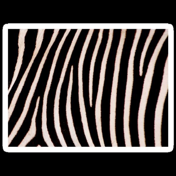 T Shirt Zebra Pattern by Linda More