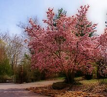 Magnolia Tree by Sandy Keeton