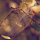 Spiderweb by agatkk