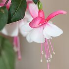 White Fuschia Ballerina by richeriley