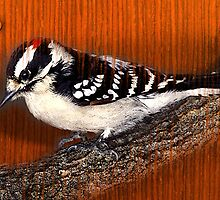 wood pecker by arteology