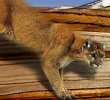 cougar by arteology