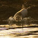 Right....Thats Enough Photographs,I'm Off! by Gary Buchan