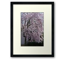 The Weeping Cherry Tree..... Framed Print