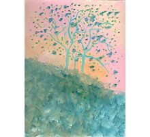 Trees Blooming (acrylic) Photographic Print