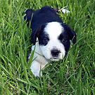 Puppy's first encounter with grass. by Julie Sleeman