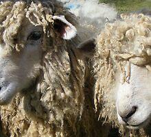 shaggy sheap by amylw1