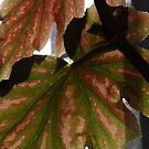 ISO - Through the Leaf by Sensei1953