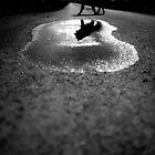Dog shadow by vlamas