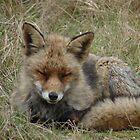 Fox (2) by angeljootje