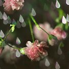 spring rain by photofairy