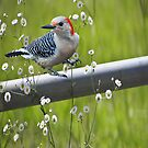 I Love Spring by Pat Moore