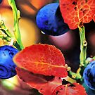 Blueberries by tomcosic