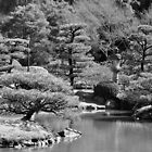 Japanese Garden by Jeff Cook