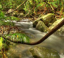 Daintree Creek by Ryan Pedlow