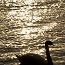 Swan silhouette by Joshdbaker