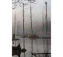 Daybreak - Blue Heron Rookery - Bridgton, Maine Photographic Print