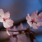 Put A Little Pink In Your Day (Pink Blossoms) by Dave Bledsoe